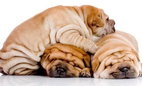 狗狗为什么肥胖?导致狗狗肥胖的原因是什么
